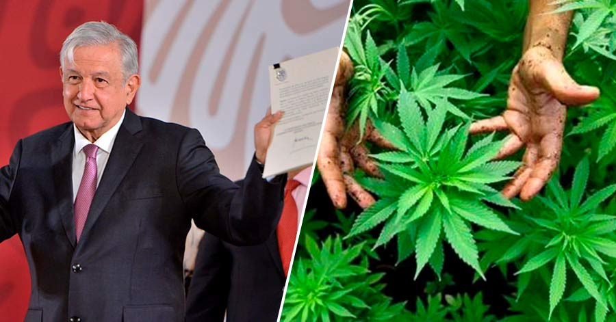 Gobierno de AMLO anuncia que se legalizarán las drogas en el país - Nación  Unida