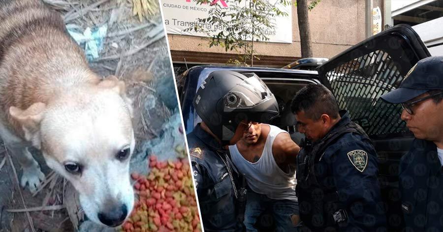 Por primera vez en México, hombre es encarcelado tras matar a un perro